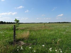 Das Wallnussfeld entsteht in Velten (Brandenburg)