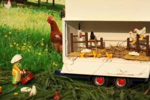 Hühner mit Hahn
